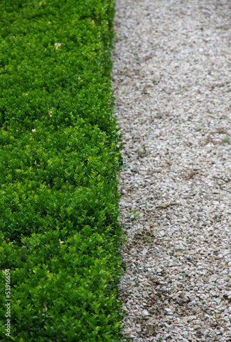 Green hedge and half white pebbles cobbled road vertically