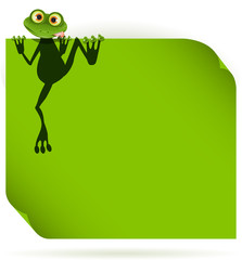 frog on a green leaf