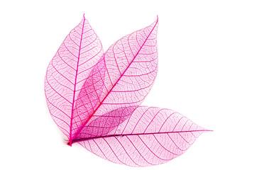 Textile Blätter