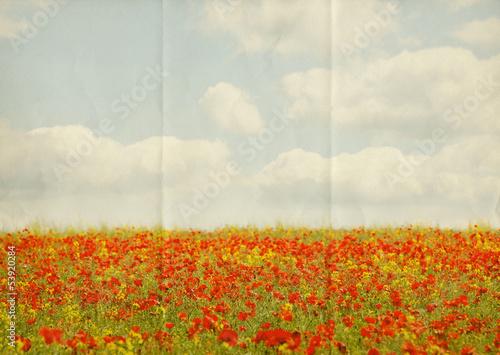 paper poppy field