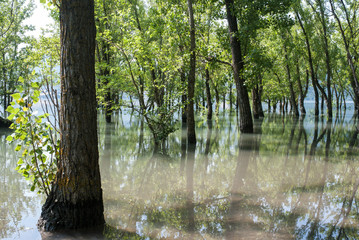 Flooded trees in Sant Antoni swamp, Pre-Pyrenees, Catalonia