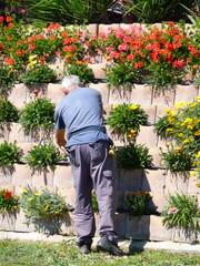 giardiniere al lavoro in un'aiuola