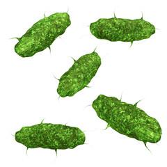 Bakterien - isoliert -  3D Render