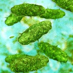 Bakterien - 3D Render