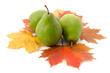 Birnen auf Herbstblättern