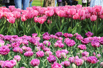Beautiful park with tulips