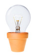 Growing Ideas Light Bulb in Flower Pot with Clipping Path