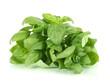 Green fresh basil isolated on white