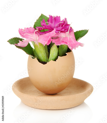 Flowers growing from egg shell, isolated on white