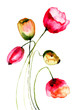Quadro Tulips flowers, watercolor illustration