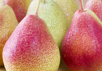 Close up image of forelle pears with water droplets