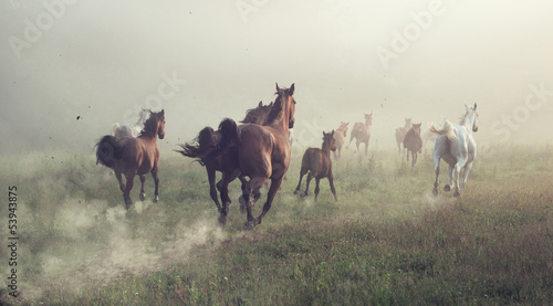 Poster Group of horses on the meadow