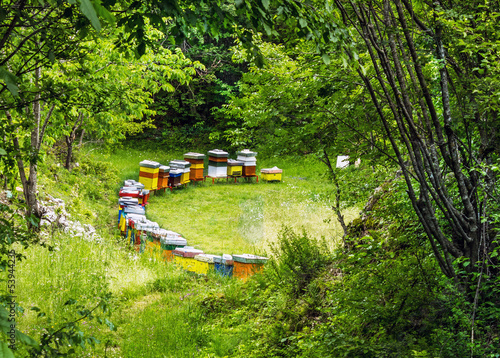 Colored beehives on the meadow in countryside of Montenegro.