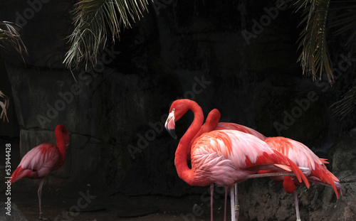 Foto op Canvas Flamingo Flamingoes