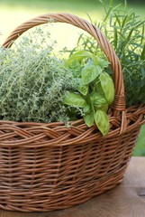 Basket with thyme, basil and rosemary in the garden