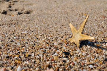 shell in sea