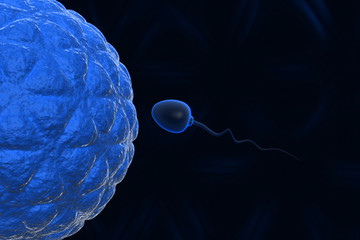 Natural insemination: sperm and human egg