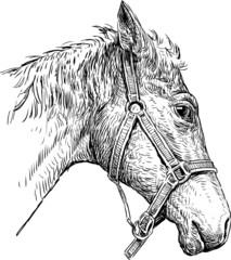 head of harnessed horse