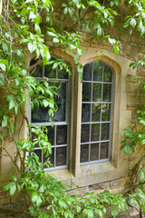Stone window with climbing plants
