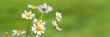 banner von blütenköpfe