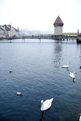 ルツェルン カペル橋と白鳥