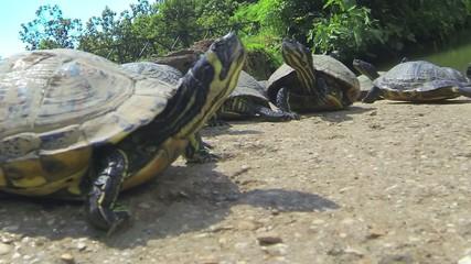 Tortoises Land