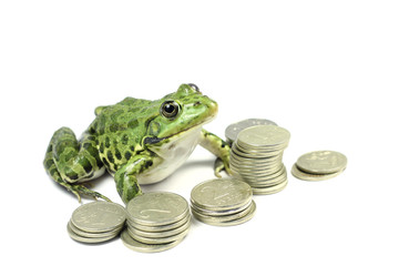green frog with money