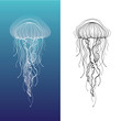 Jellyfish1 - 53955240