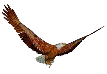 American bald eagle - 3D render