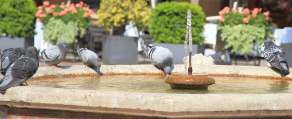 Fontana con piccioni in un centro storico italiano