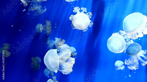 White jellyfish in blue ocean water