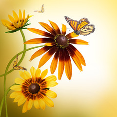 Multi-colored gerbera daisies and a butterfly