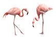 Leinwanddruck Bild - Two flamingo