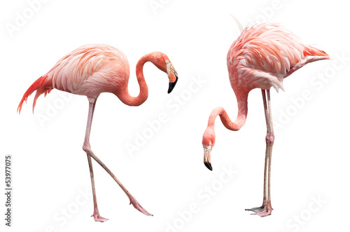 Fotobehang Vogel Two flamingo