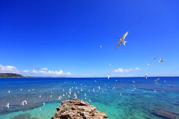 南国沖縄 コマカ島の渡り鳥
