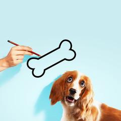 Hungry spaniel dog