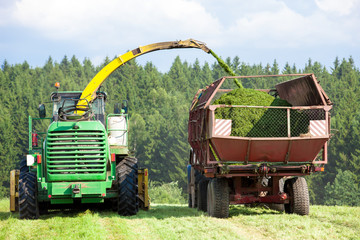 Silage Season - harvester cuts a field and loading grass