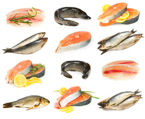 Set of fish isolated on white background.