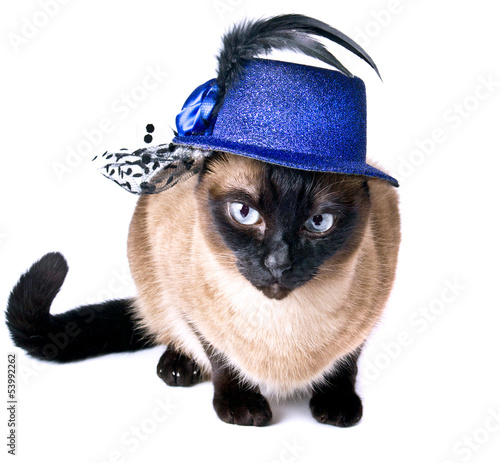 Funny Animal Cute Siamese Hilarious Humor Cat isolated