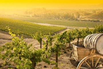 Grape Vineyard with Old Barrel Carriage Wagon.