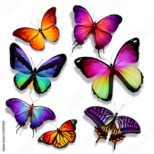 Many different butterflies flying, isolated on white background