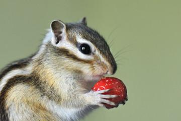 L'écureuil et la fraise