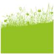 Silhouette, Sommer, Wiese, Blumenwiese, grün
