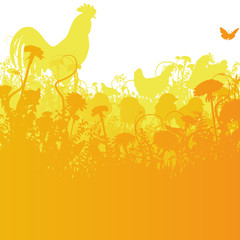Huhn und Hahn im Sommer auf dem Hof