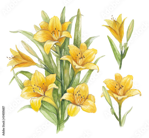 Watercolor illustration of lily flowers