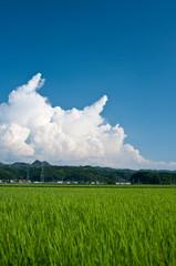 田んぼと入道雲