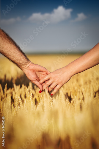 Hands in wheat field