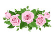 Pink roses, rosebuds and leaves. Vector illustration.