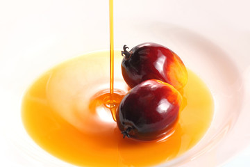 Oil palm fruit and cooking oil