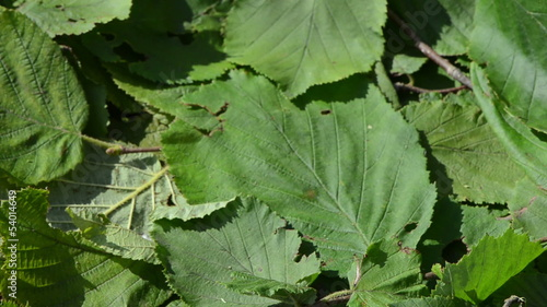 closeup hand take wooden wicker dish full of ripe hazel nuts